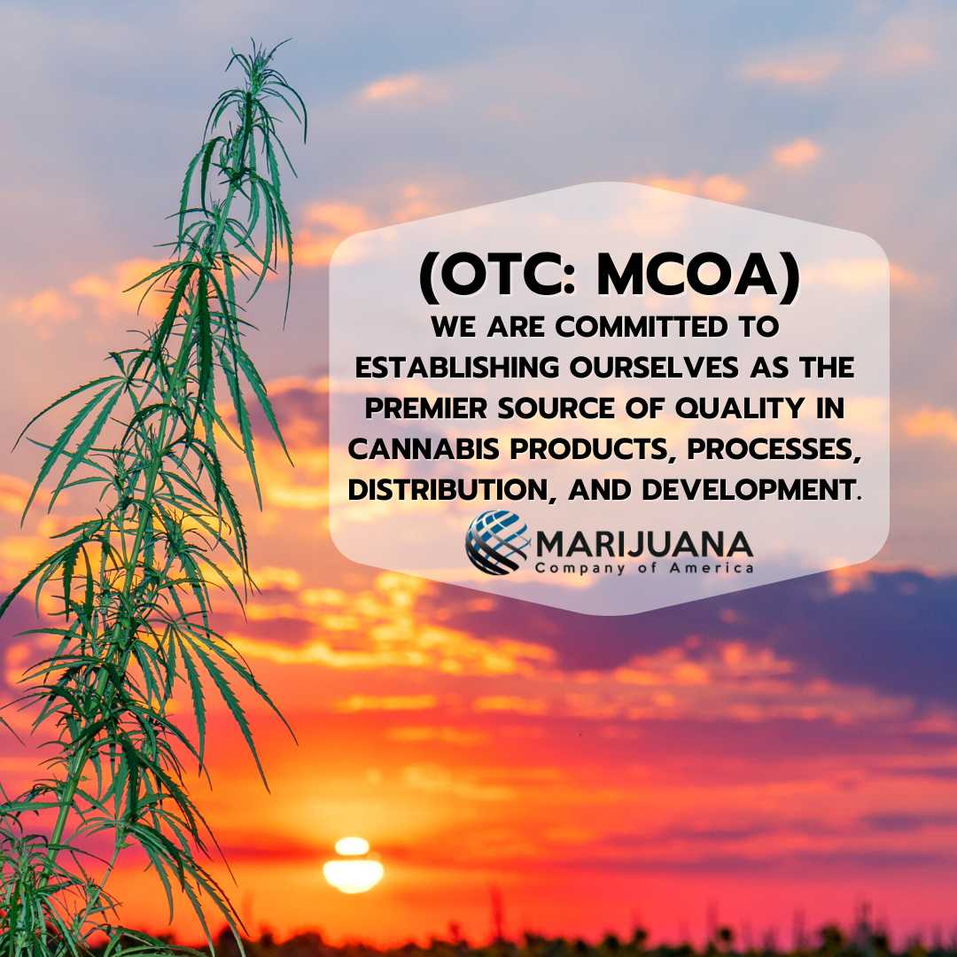marijuana plant with a sunset in the background - smallcapvoice